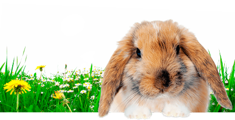 All about rabbits  Nutrition | Keeping | Biology